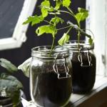bepflanzte Vorratsgläser